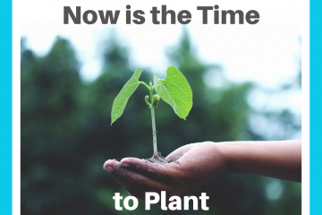 Now is the Time to Plant